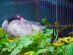 鶴とルリアゲハ