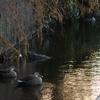 散歩道脇の用水路の生活
