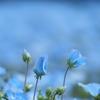 春のブルー