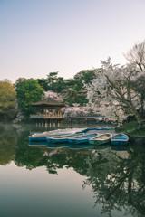 浮見堂と桜3