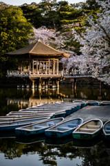 浮見堂と桜4