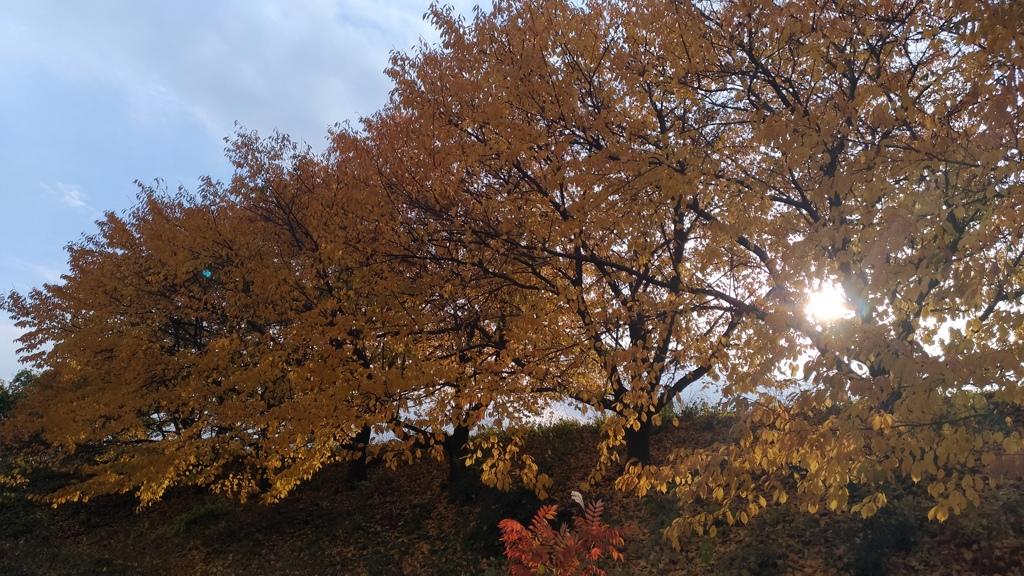 秋色に陽は暮れて