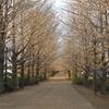 昭和記念公園のいちょう並木(散った後)