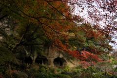 報国寺 竹林に入る前の庭園