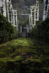 杉本寺の苔石段 上から