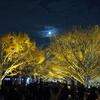 昭和記念公園の立川口のライトアップ