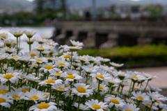 琵琶湖洗堰
