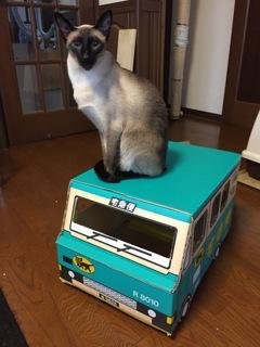 ネコの宅急便(ルーフで休憩中)