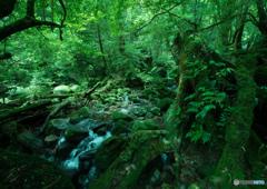 屋久島 白谷雲水峡散策