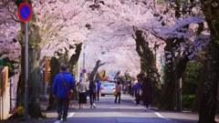 神戸市桜坂高尾通り