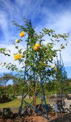 薔薇と鉄塔(-^艸^-)