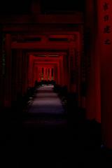 伏見稲荷大社-千本鳥居5- -誘う紅-