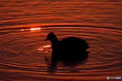 光と野鳥の影