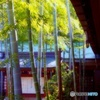 赤坂の竹 (春が恋しいので)
