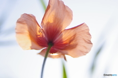 オレンジ色の花びら