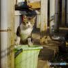 ご近所猫の子 バケツのお立ち台