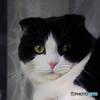 窓猫 金の瞳