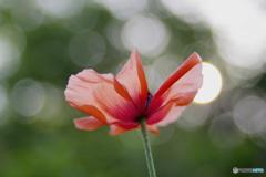 花びらで蝶