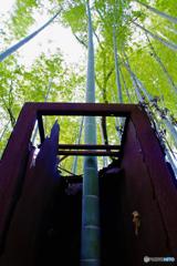 鉄のロッカーを突き抜ける 竹