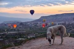 朝焼けと気球と野良犬