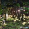 白彼岸花の庭