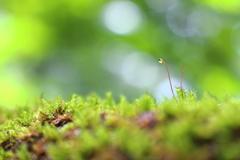 苔の生えた手すり