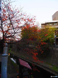 紅葉と夕暮れ