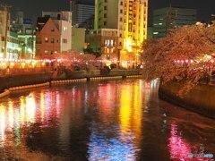 夜桜満喫  ⑦