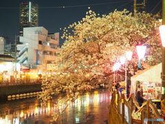 夜桜満喫  ⑧