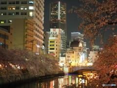 夜桜満喫  ⑤