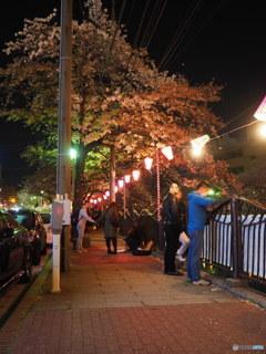 夜桜満喫  ⑥
