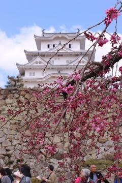 梅と白鷺城