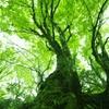 緑がいっぱい