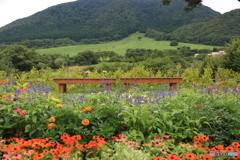 花畑のベンチ