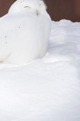 雪隠れの術