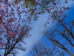 桜咲く 北国の春