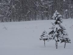 雪の中を…
