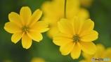 笑顔になる黄色い花