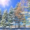 冬の樹木たち
