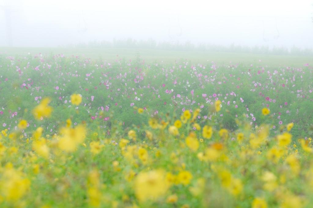 霧の黒姫高原