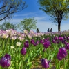 春を楽しむ