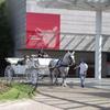 道産子の白馬