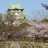 天守閣と桜②