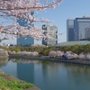 大阪城梅林の石垣から