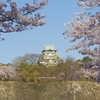 天守閣と桜③