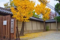 銀杏の黄葉と落葉④