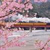 大井川鉄道の春②‼