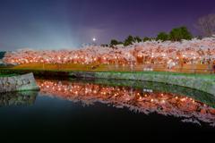 五稜郭公園の夜桜①