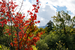 紅葉とちょこっと樽前山?
