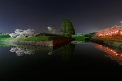 五稜郭公園の夜桜②